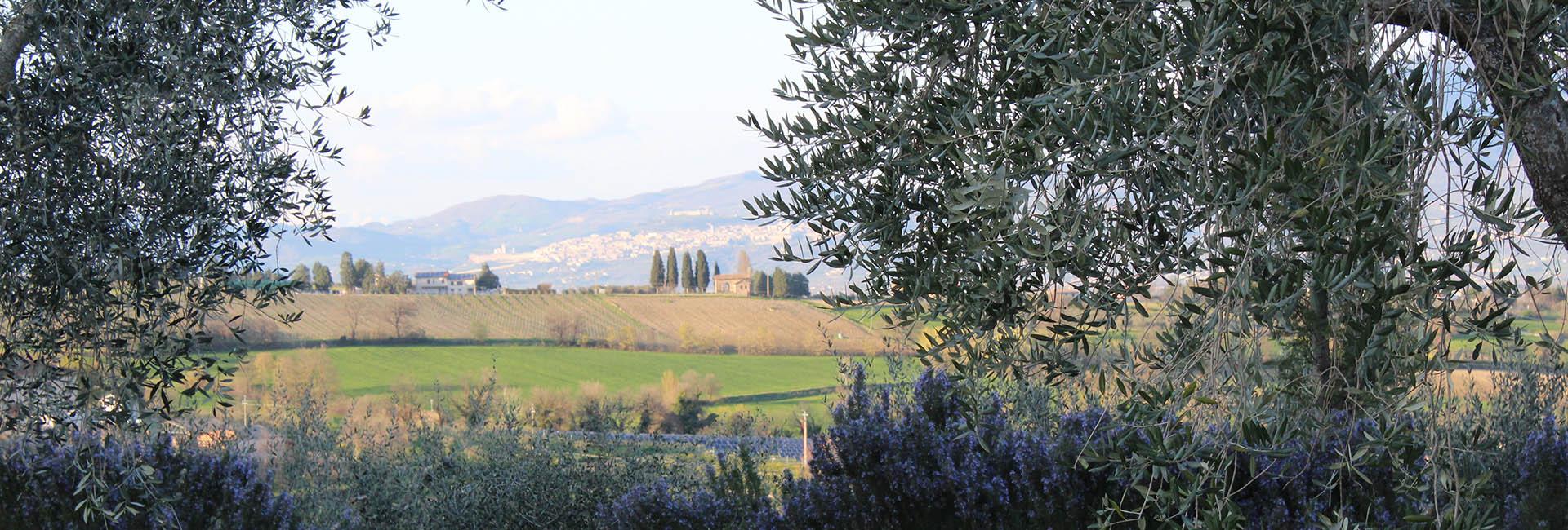 Agriturismo in Umbria - questi sono i panorami che si vedono